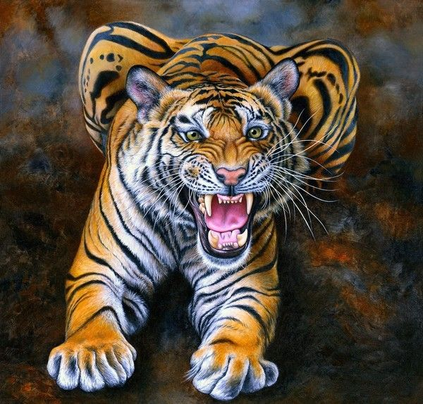 tigre de binghal