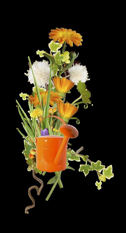 Gül resim çiçek gül gölge resim galerisi güzel gül
