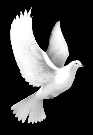 iki beyaz guvercin png romantik resimler, beyaz mavi hareketli gifli