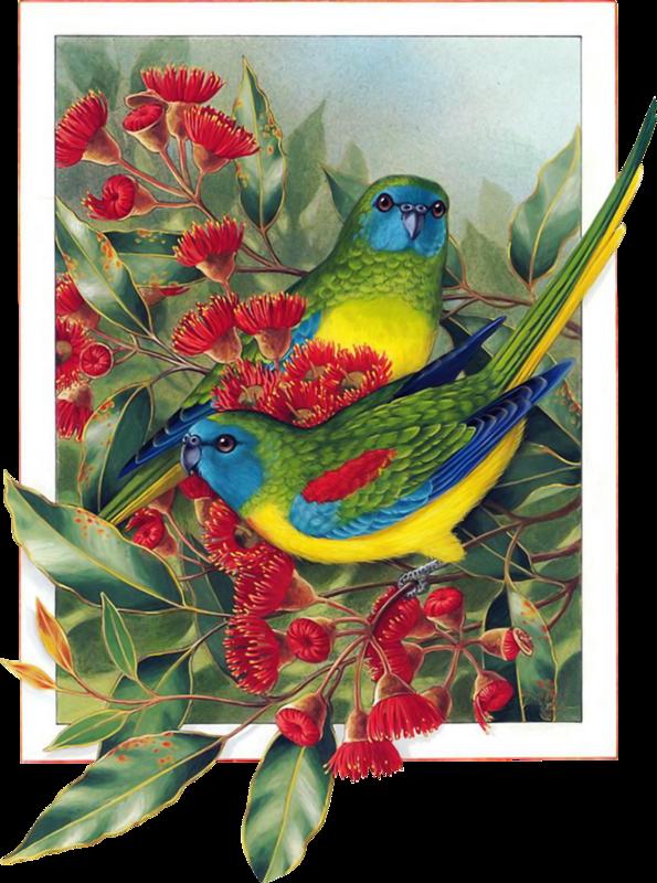 Райские птицы для вышивки 62