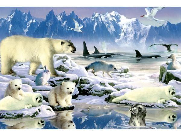 Extrêmement animaux de la banquise - Page 2 PP21