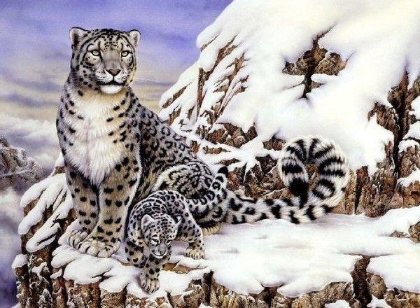 Les Leopards Les Leopards