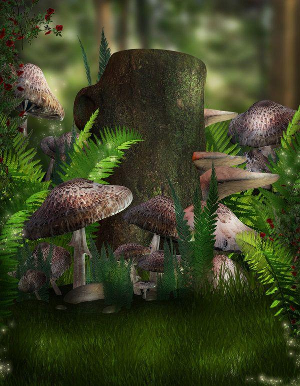 Les champignons  - Page 2 Dec69969