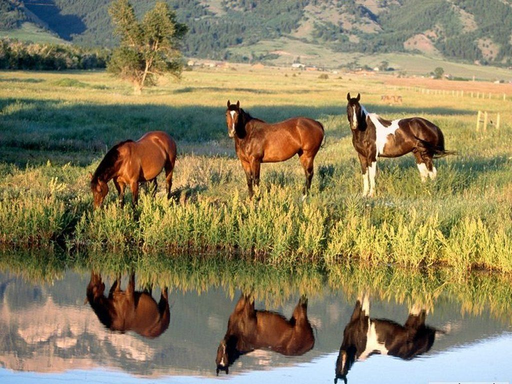 Fond d ecran chevaux centerblog for Sfondi cavalli gratis